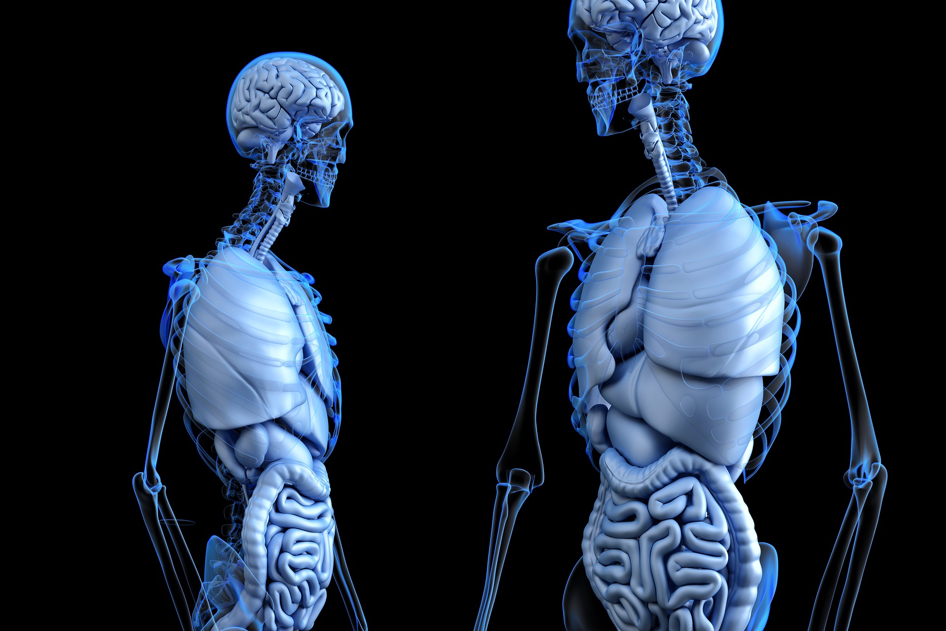 Anatomical Society Research Studentships Open for Application