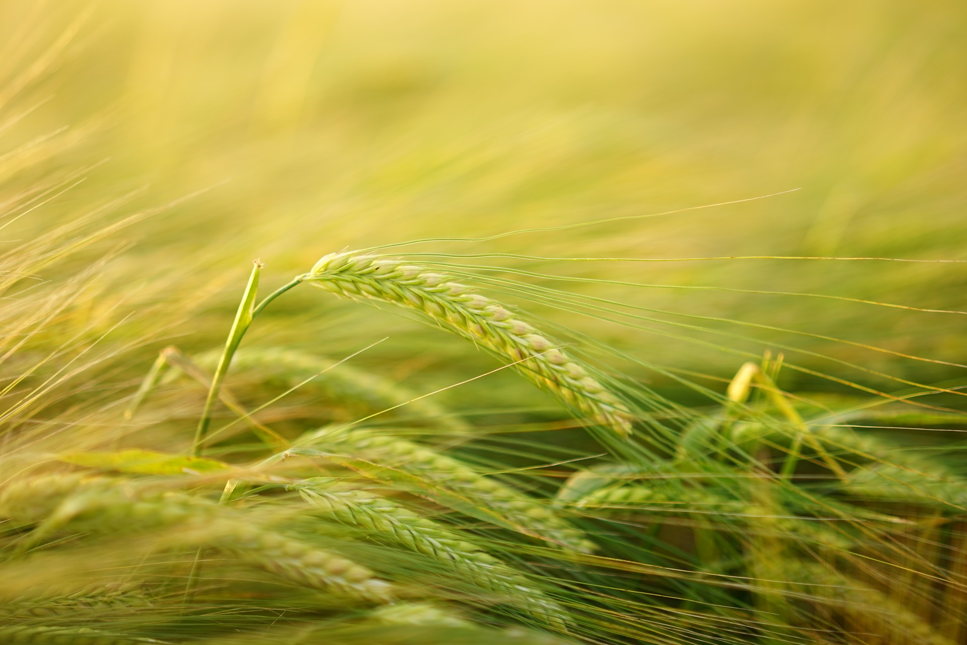 Bayer Grants for Crop Research Open for Application