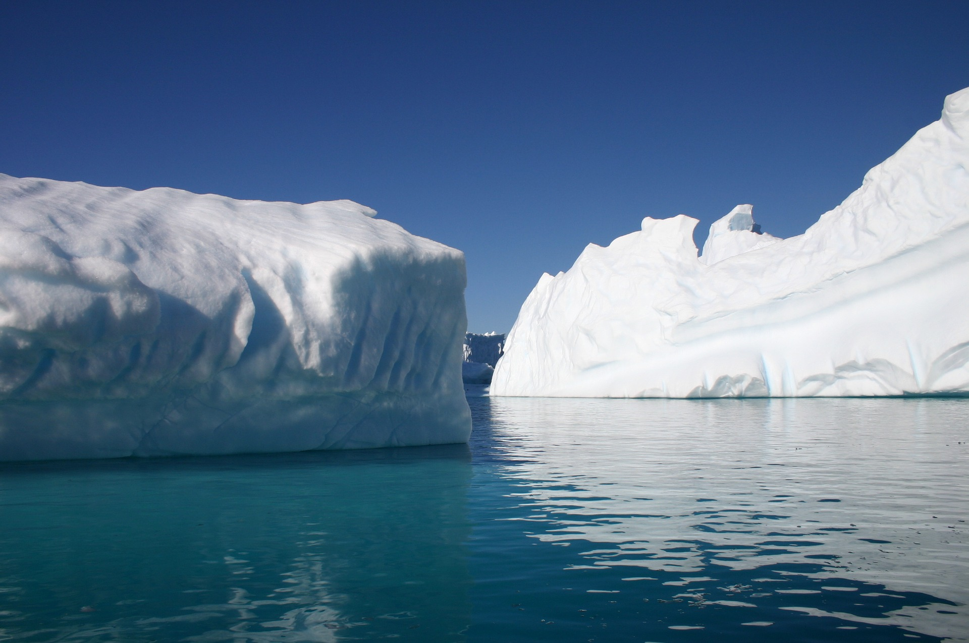 Antarctic Wildlife Research Fund Open to Applications