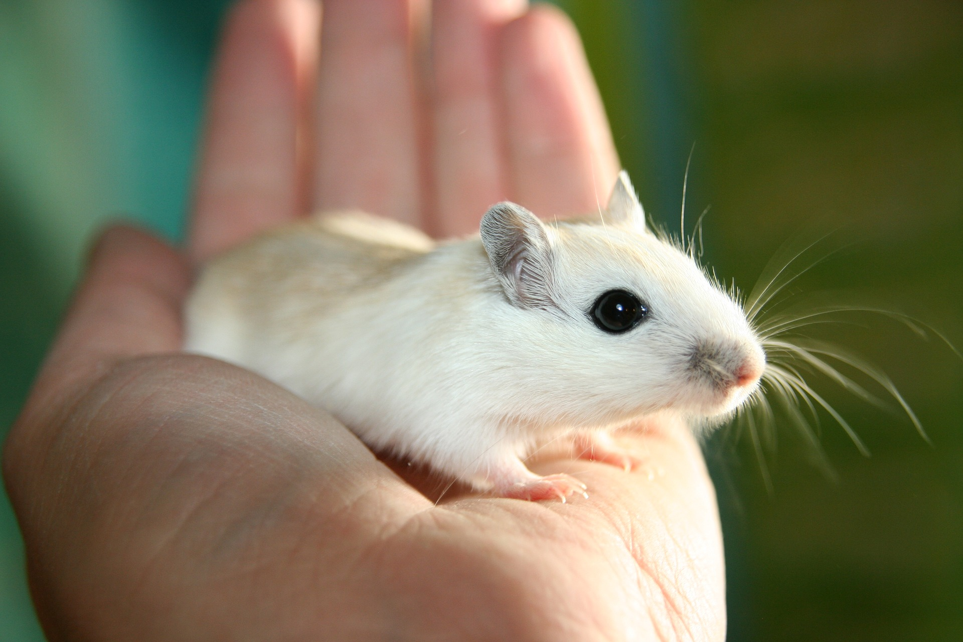 NC3Rs Invites Proposals for Project Grants for Humane Animal Research