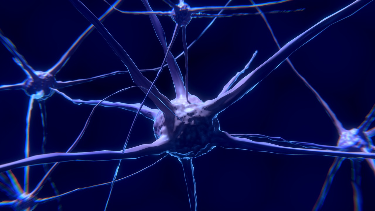 FET Flagship Human Brain Project Launches Four Calls