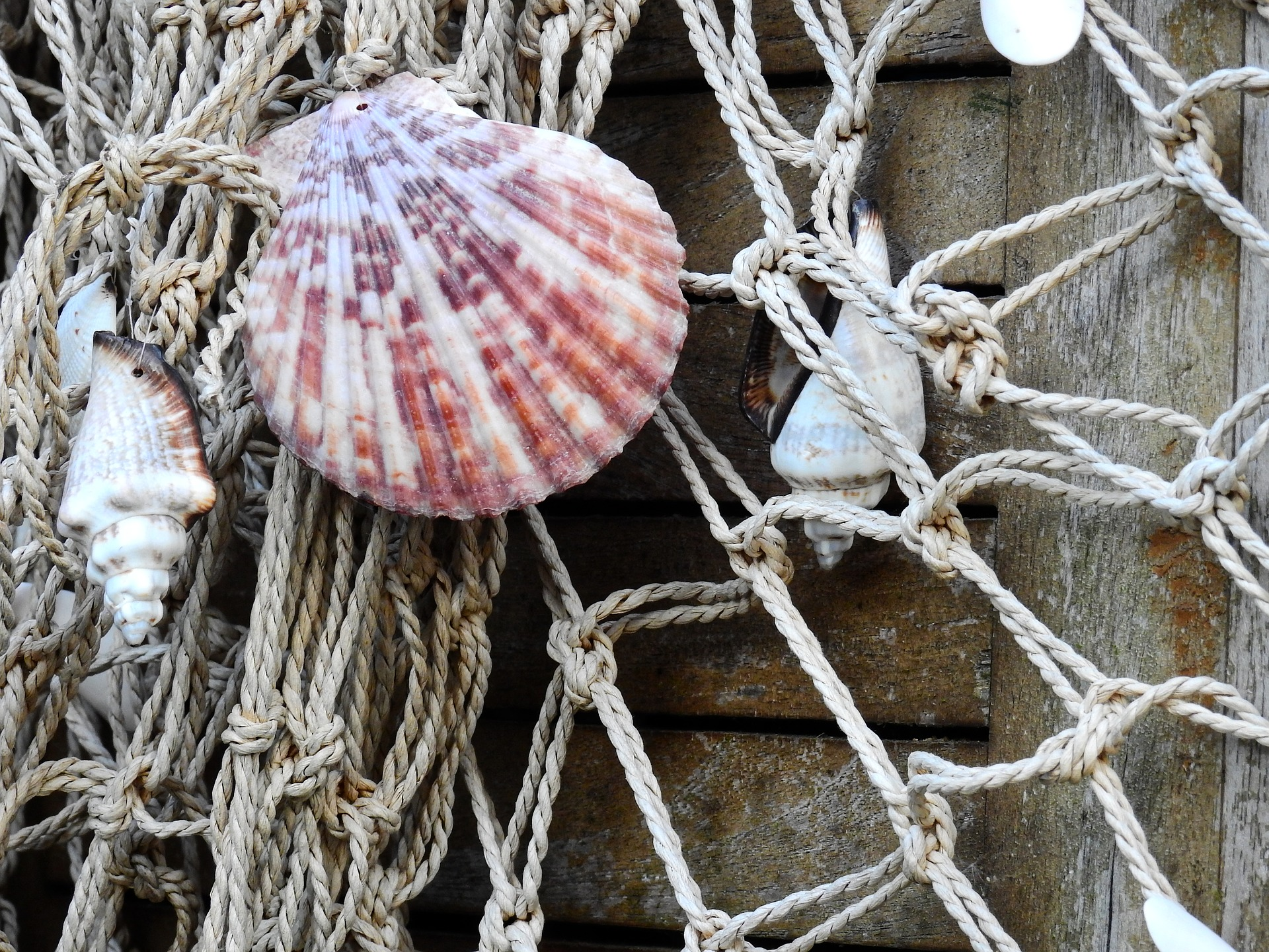 UK Seafood Innovation Fund: New Funding Round Open