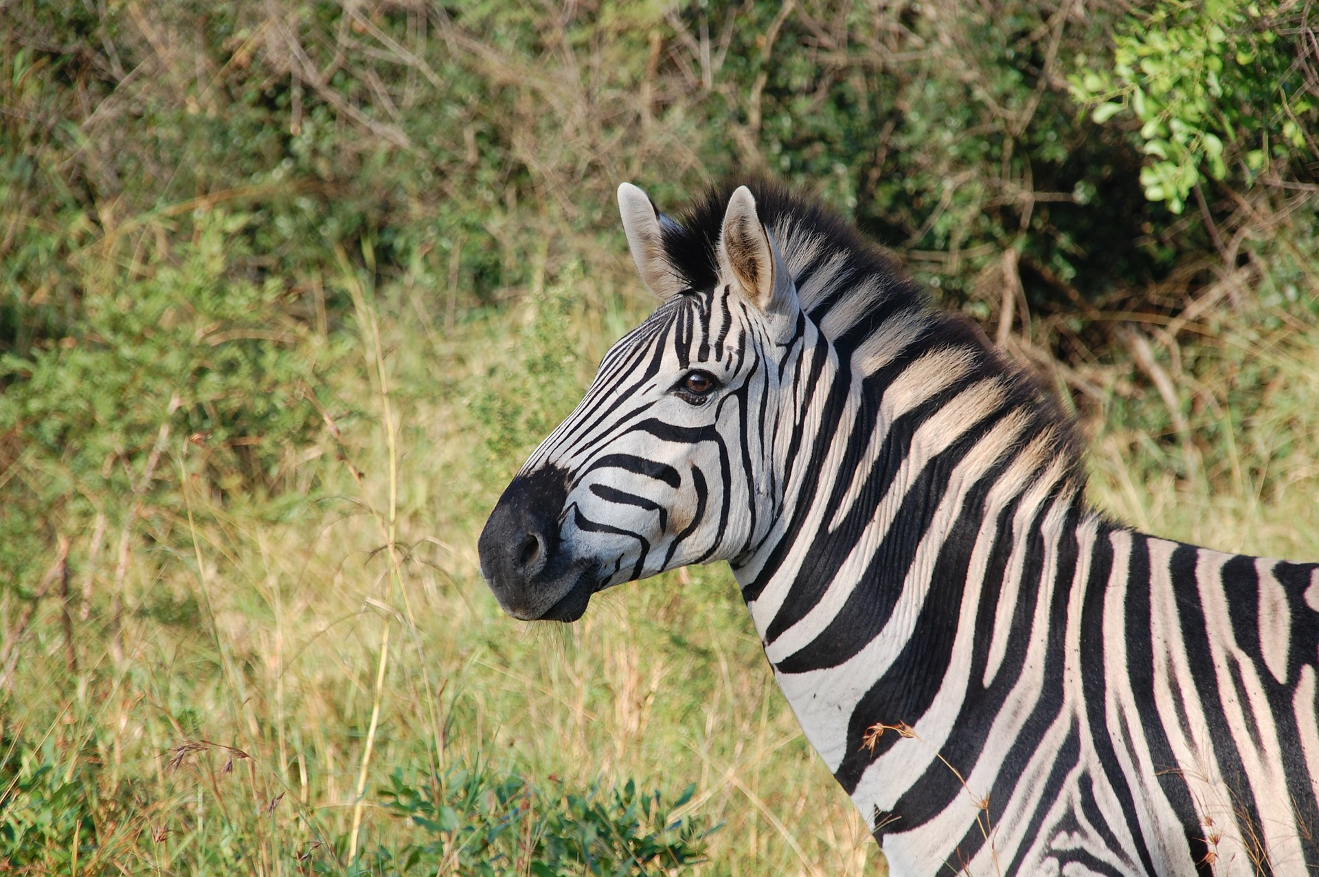 Zebra Foundation Grants Available for Zoological Medicine Research