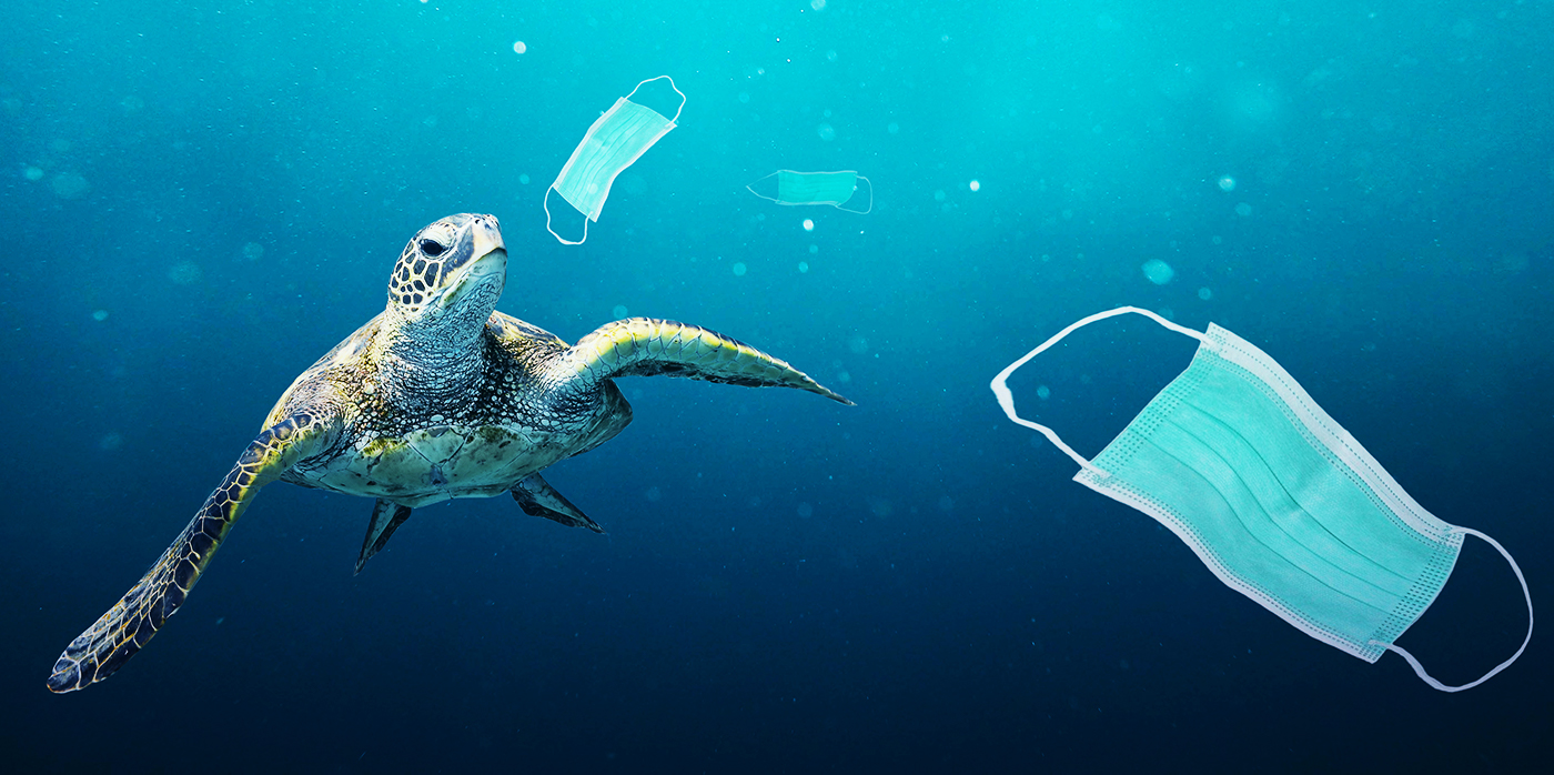 Marine conservation fund_Turtle in ocean with discarded facemasks