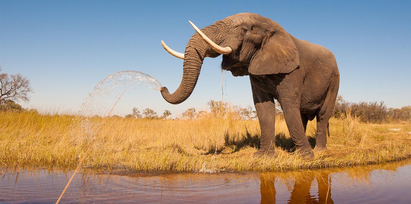 Image of elephant near water hole